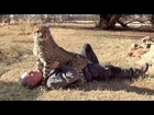 Loved By An Affectionate African Cheetah - Man & Cheetah Are Best Friends - Saying Goodbye MMA Style