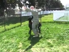 Emmitt Thunderpaws Welcomes Home His Military Dad! - 100500 Really Funny Dog Video