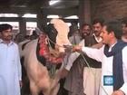 Rare Miracle animal (Anokha Mojza Janwar)